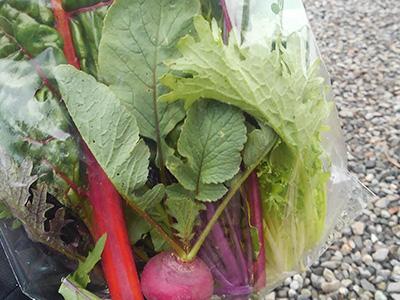 10月産直野菜